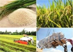 Thúc đẩy sản xuất theo chuỗi giá trị, bảo đảm chất lượng gạo xuất khẩu